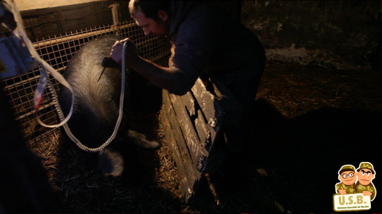 macpixel butchering a pig4